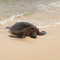Foto tomada en Laniakea (Turtle) Beach por 🎀 Marian 🎀 el 4/21/2013