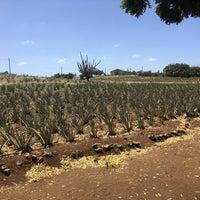 Foto tomada en Aloe Vera Plantation. por Miranda c. el 3/11/2018