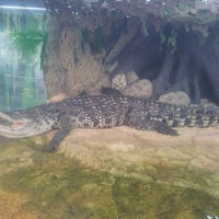 Photo taken at Крокодил Гоша by Slava F. on 7/2/2013