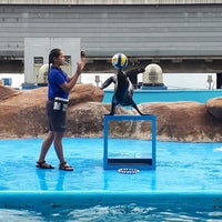 Photo taken at Acquatica - Sea Lion Show by Prans A. on 3/22/2018