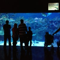 Photo taken at Aquaria KLCC by Que T. on 1/27/2013