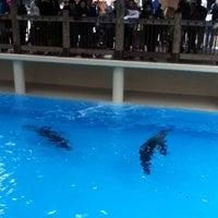 1/2/2013 tarihinde sophye R.ziyaretçi tarafından California Sea Lions Pool'de çekilen fotoğraf