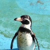 Das Foto wurde bei Kölner Zoo von Sascha R. am 10/20/2012 aufgenommen