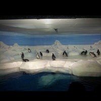 Photo taken at Shanghai Ocean Aquarium by Erik-Anastasios on 11/4/2012