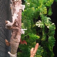 Photo taken at LLL Reptile by Dan O. on 4/24/2014
