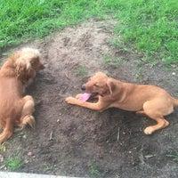 Photo taken at My Dog's Diggin' Dog Park by James B. on 6/18/2017