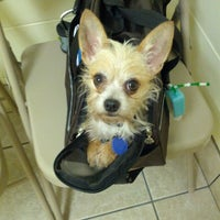 Photo taken at Gainesville Animal Hospital by Shelley S. on 5/17/2013