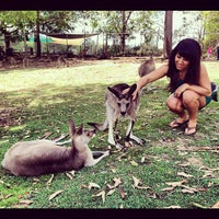 Photo taken at Lone Pine Koala Sanctuary by Sara P. on 12/6/2012
