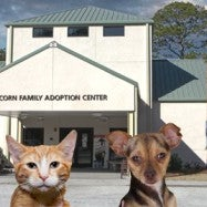 Photo taken at Humane Society of South Coastal GA by Leigh Anne E. on 11/23/2012