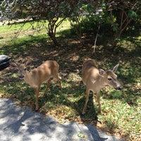 Photo taken at Big Pine Key by Alina D. on 4/6/2013