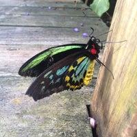 Photo taken at Butterfly Pavilion by mindi on 11/11/2012