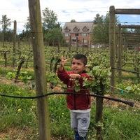 Photo taken at Backyard Vineyards by Thulo K. on 5/17/2014
