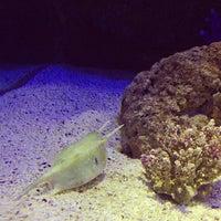 Photo taken at SEA LIFE Bangkok Ocean World by Poon P. on 12/30/2012