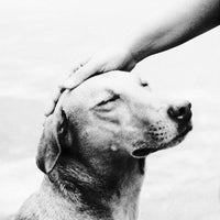 Photo taken at Learning to Lead Dog Training by Learning to Lead Dog Training on 6/3/2016