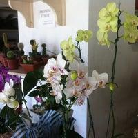 Photo taken at Floricultura Bosque das Flores by NANI B. on 2/21/2013