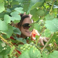 Photo taken at Ciccone Vineyard & Winery by Stephanie on 8/31/2013