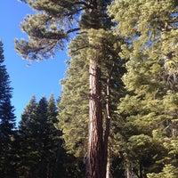 Снимок сделан в Tahoe Rim Trail / Brockway Summit пользователем Ryan P. 1/19/2014