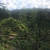 Снимок сделан в Tegallalang Rice Terraces пользователем Amanda W. 3/3/2017