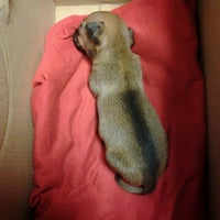 Photo taken at Paradise Pet Hospital by Brittany P. on 6/4/2013