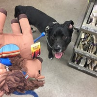 Photo taken at Unleashed by Petco by Lu Y. on 5/6/2017