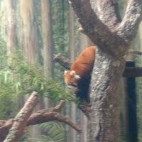 3/14/2017 tarihinde Mike B.ziyaretçi tarafından Red Panda Habitat'de çekilen fotoğraf