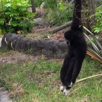 Photo taken at Oakland Zoo by Andy L. on 7/9/2012