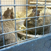 Photo taken at Pets at Home by Timothy N. on 10/28/2011