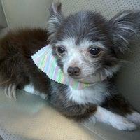 Photo taken at ITIG Dog Wash by mLehua on 7/5/2012