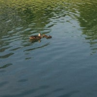 Photo taken at The Duck Pond by Penny N. on 7/17/2012