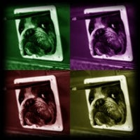 Photo taken at Simply Pet by Camila D. on 4/8/2012