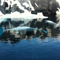 7/6/2012 tarihinde Ethan S.ziyaretçi tarafından Wild Arctic'de çekilen fotoğraf