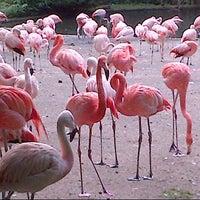 Photo taken at Prague Zoo by Elena S. on 8/12/2012