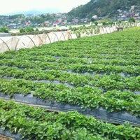 Photo taken at Strawberry Farm by chorls s. on 4/24/2012