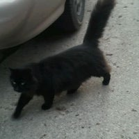 Photo taken at Black Cat Spotting by Chloe E. on 4/4/2012