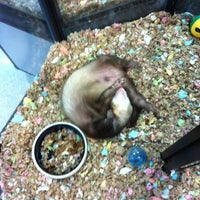 Photo taken at Super Pets by Jane A. on 6/16/2012