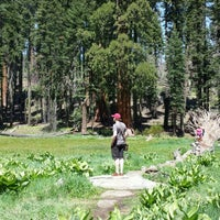 Photo taken at Giant Trees Meadow by Vadim L. on 6/4/2016