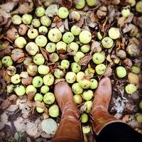 Снимок сделан в Яблоневый сад пользователем Ilona F. 10/11/2012