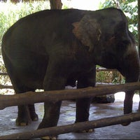 Photo taken at Jungle cruise, taman safari 3 by Oka S. on 12/2/2012