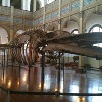 Foto tirada no(a) Museo Nacional de Historia Natural por Rocio S. em 10/17/2012