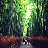 Photo taken at Arashiyama Bamboo Grove by Tania R. on 9/13/2014