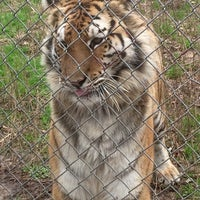 Photo taken at Carolina Tiger Rescue by Marion on 2/20/2016