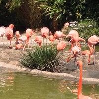 Photo taken at Flamingo Exhibit by Jason K. on 4/27/2013