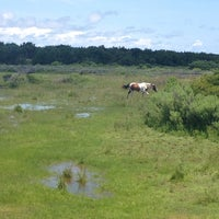 Photo taken at Ocracoke Pony Pasture by Jessica H. on 7/7/2014