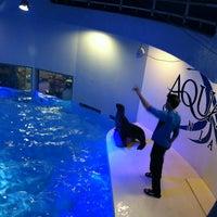 Photo taken at Aquarium of Niagara by Pam L. on 1/21/2013