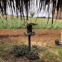 Foto tomada en Aloe Vera Plantation. por Marcy B. el 3/23/2017
