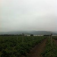 Photo taken at Santa Olivia (La Palma Quillota) by Miguel  on 11/23/2013
