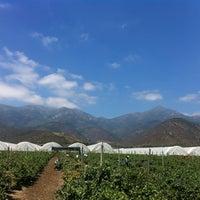 Photo taken at Santa Olivia (La Palma Quillota) by Miguel  on 11/6/2013