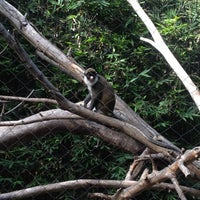 Photo taken at Monkey Trail by 🌺Dolores B. on 11/14/2012