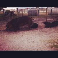 Photo taken at Dakin Dairy Farm by Melissa M. on 12/1/2012