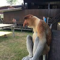 Photo taken at Labuk Bay Proboscis Monkey Sanctuary by Rachel R. on 3/8/2017